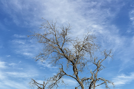 sky background: Dead tree branches with the blue sky in the background