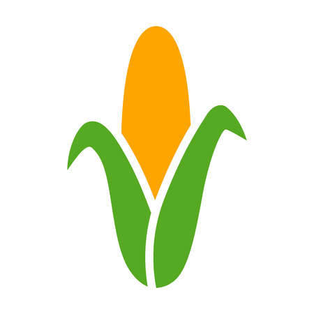 genetically modified crops: Ear of corn  maize flat color icon for food apps and websites