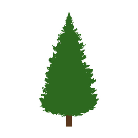 boreal: Evergreen conifer  pine tree flat color icon for apps and websites Illustration