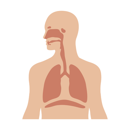 Human biological respiratory system flat color icon for medical apps and websites