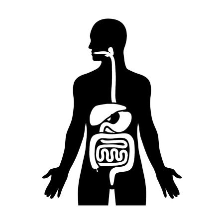 upper: Human biological digestive  digestion system flat icon for medical apps and websites