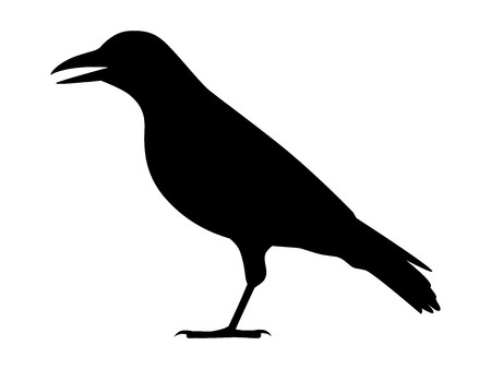 Crow, raven, jackdaw or corvus bird flat icon for apps and websites