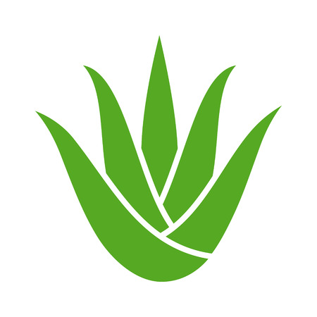 Green aloe vera plant with leaves flat color icon for apps and websites