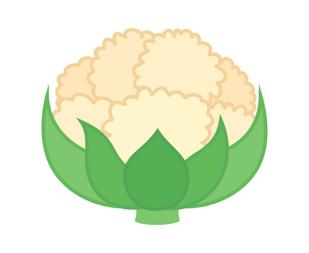 brassica: Cauliflower vegetable with leaves flat vector color icon for food apps and websites Illustration