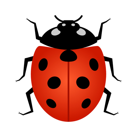infestation: Ladybug insect line art vector icon