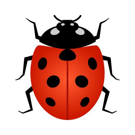 Ladybug insect line art vector icon