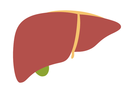 Human liver organ with gallbladder flat vector color icon for medical apps and websites Illustration
