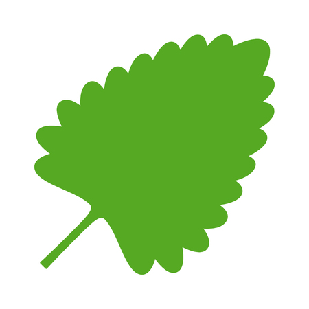 A Catnip, catswort or catmint leaf flat color vector icon for apps and websites. Illustration