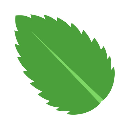 aftertaste: Peppermint  Spearmint mint or mentha leaf flat vector color icon for apps and websites Illustration