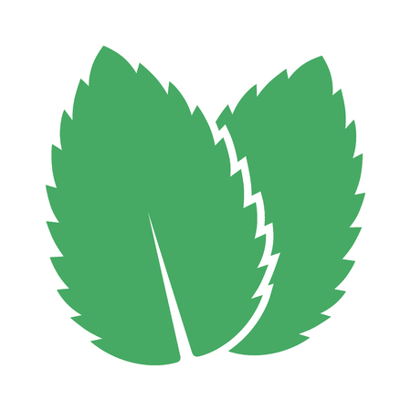 aftertaste: Two peppermint  spearmint mint or mentha leaves flat vector color icon for apps and websites. Illustration
