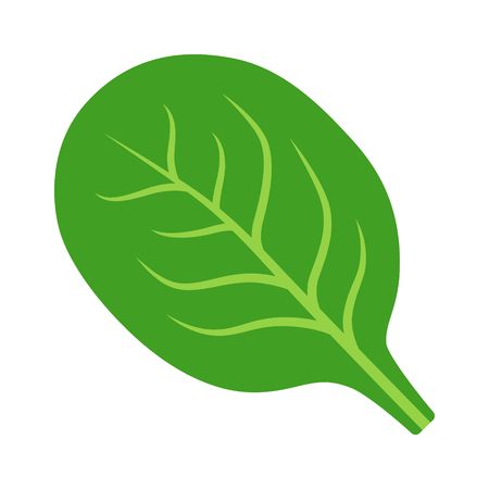 Spinach green vegetable leaf flat vector icon for food apps and websites 스톡 콘텐츠 - 100821261