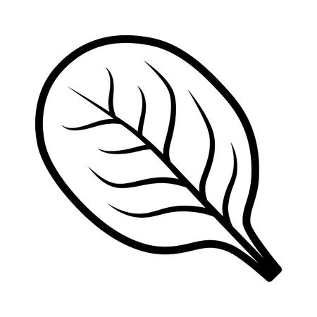 Spinach vegetable leaf line art vector icon for food apps and websites 스톡 콘텐츠 - 100914383