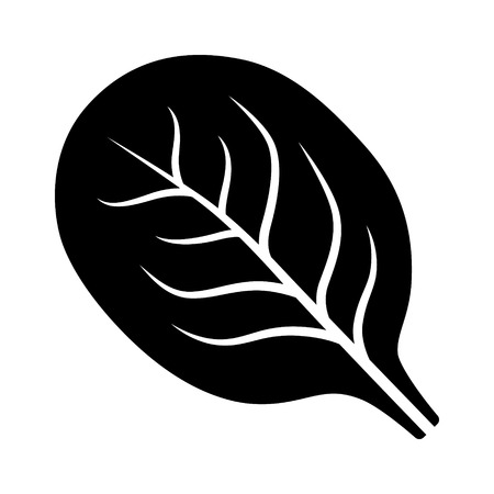 Spinach vegetable leaf flat vector icon for food apps and websites