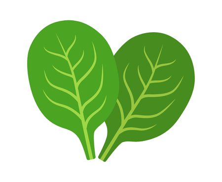 Two green spinach vegetable leaves flat vector icon for food apps and websites