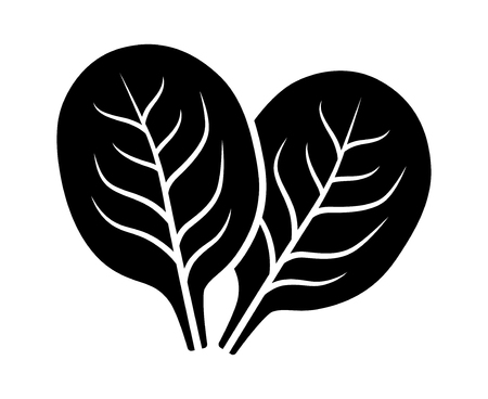Two spinach vegetable leaves flat vector icon for food apps and websites 스톡 콘텐츠 - 100821260