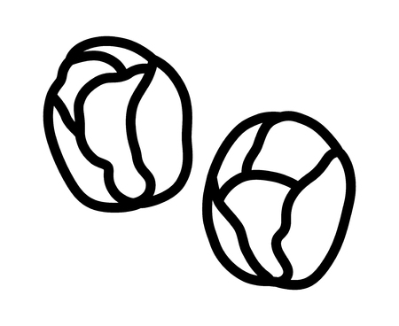 Two Brussels sprouts vegetable buds line art vector icon for food apps and websites