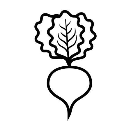 Beet or beets beetroot vegetable with leaves line art vector icon for apps and websites