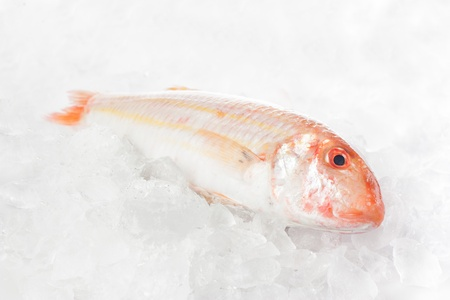 Raw mullet over crushed ice Stock Photo