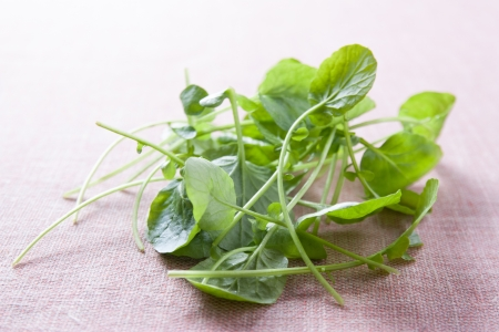 Small fresh watercress leaves on red fabric Stock Photo