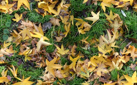 Seamless autumn groundcovering with grass and coloured leaves. Use as background or texture. Stock Photo