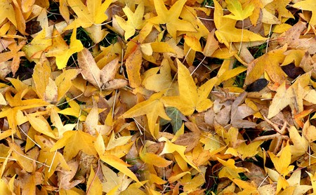 Seamless autumn groundcovering with yellow leaves. Use as background or texture. Stock Photo