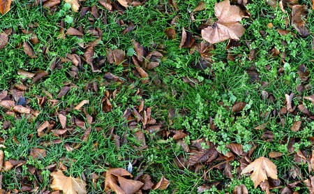 Seamless autumn groundcovering with grass and brown leaves. Use as background or texture.