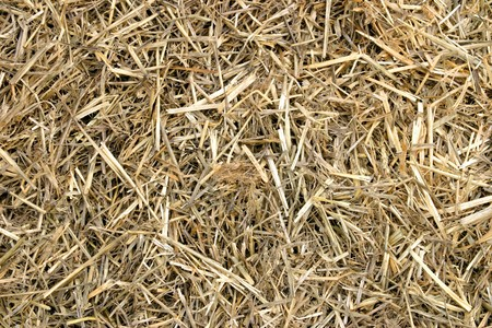 Close-up of hay. Stock Photo