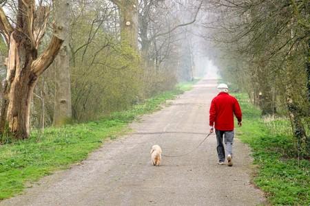 ancianos caminando: Hombre caminar a su perro en una pista forestal. Foto de archivo