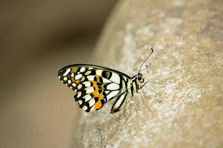 Brightly colored butterfly with closed wings standing on stone.