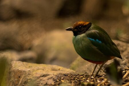 brightly colored bird standing on the ground