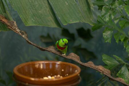 green bird sitting on tree branches Reklamní fotografie