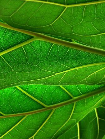 green leafs Standard-Bild
