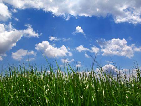 green lawn, blue sky