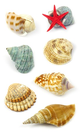 sea shells collection photo