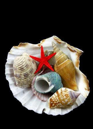 sea shells on black photo