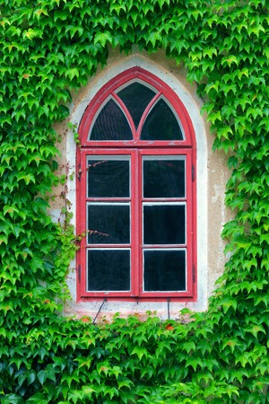 ivy wall: old window and ivy
