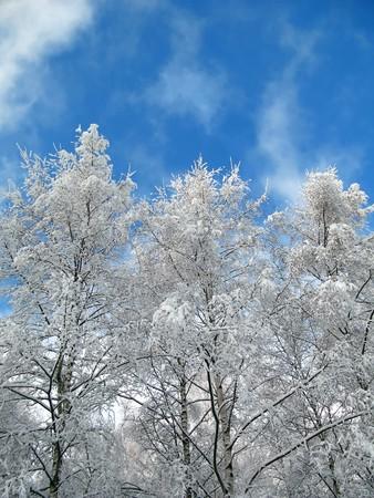winter trees Stock Photo - 8256349