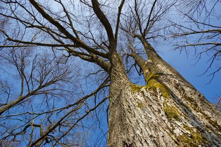 Bare trees under blue sky Stock Photo