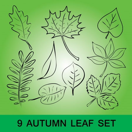 simple leaf set  Vector