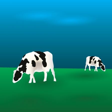 cows graze  Vector