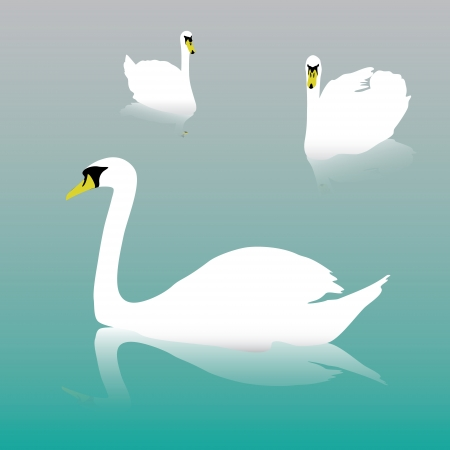 swan on the water Vector
