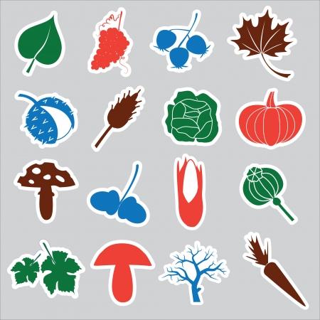 corn poppy: autumn stickers eps10