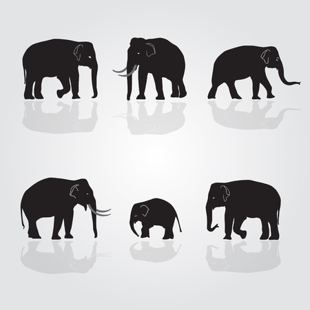 black mammoth: set of vector shadow elephants