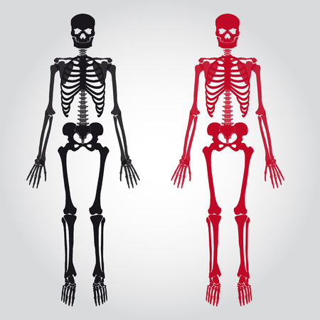 skeletons - human bones set Vector