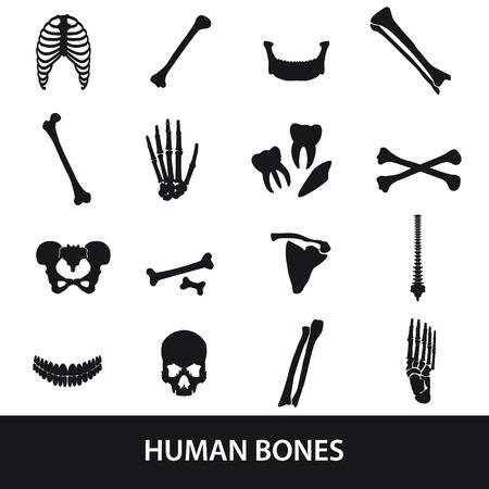 아이콘을 설정 인간의 뼈