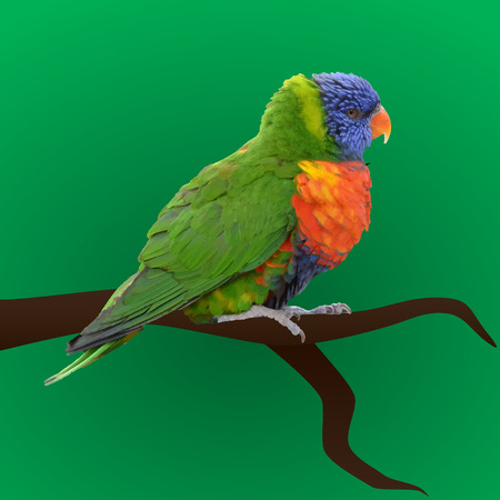 eyes looking down: colorful vector parrot sitting eps10