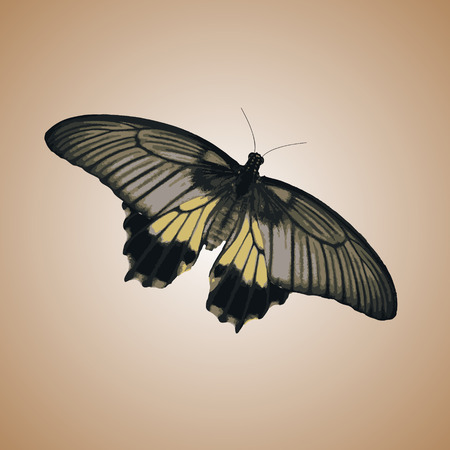 one isolated: one isolated colorful simple vector butterfly  Illustration