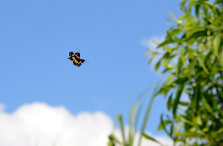 butterfly flying: little color butterfly flying on blue sky