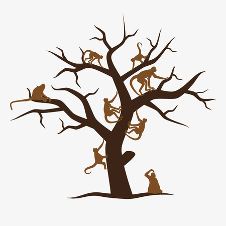 monkey in a tree: brown monkey tree with a lot of monkeys