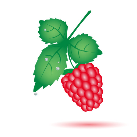 wallop: colorful raspberry summer fruit with leaf